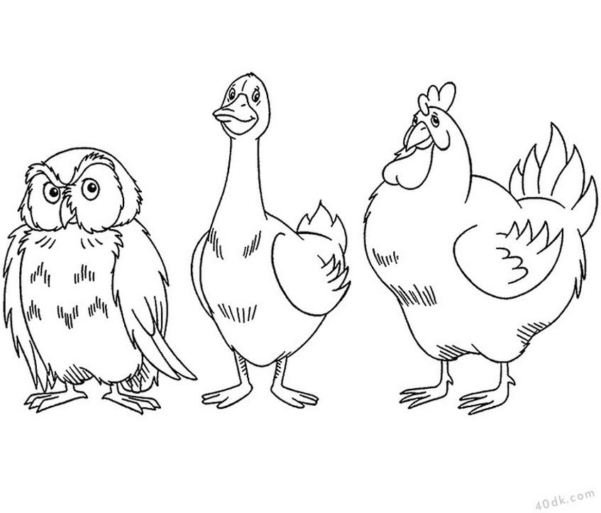 40dk.com baykuş kaz tavuk boyama sayfası  (113)